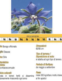 seme-di-boragine400x400