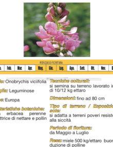 seme-lupinella400x400