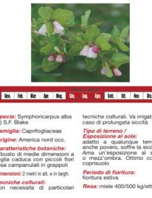 piante-delle-perle400x400