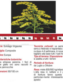 verga-d'oro400x400