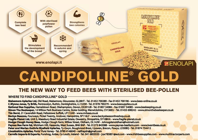 Pagina Candipolline ING