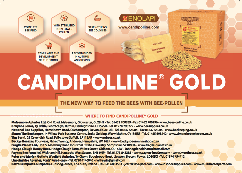 NEWPagina Candipoline_INg