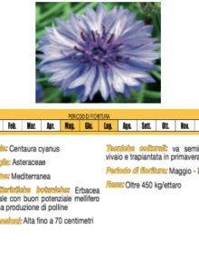 Seme-Fiordaliso400x400