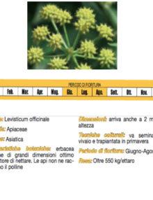 Seme-Sedano-Montagna400x400