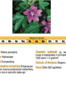 seme-Malva400x400