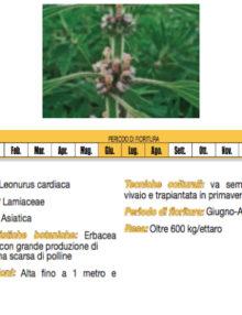 semi-Cardiaca-Comune400x400