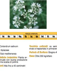 semi-Coriandolo400x400
