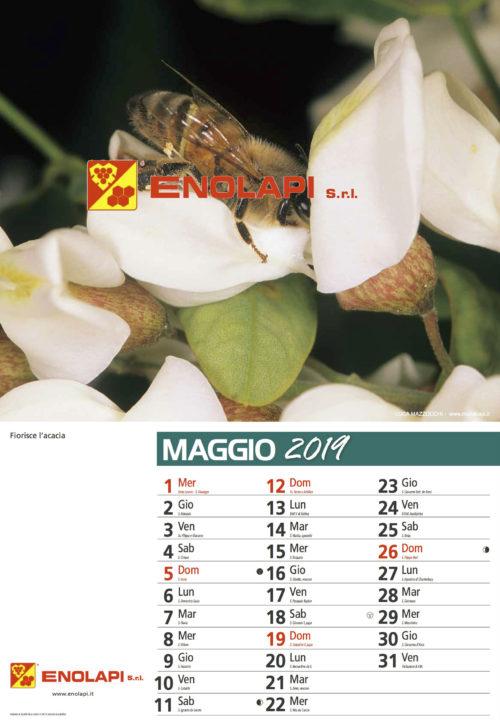calendario_enolapi7s